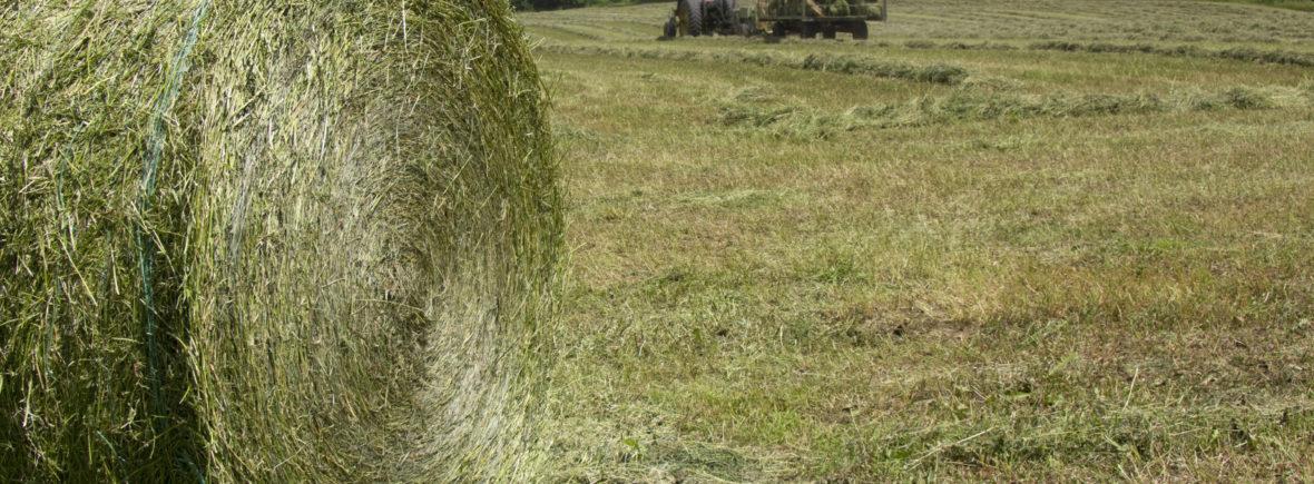 Alfalfa Round Bale
