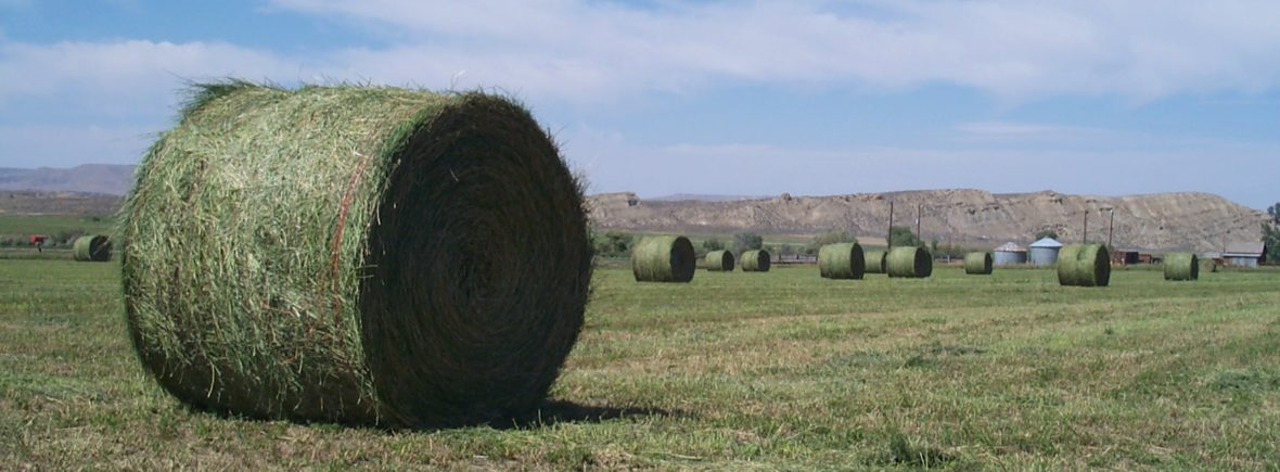 Feed and Forage, specifically Alfalfa Rounds